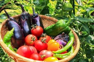 夏バテ解消にぴったりの夏野菜