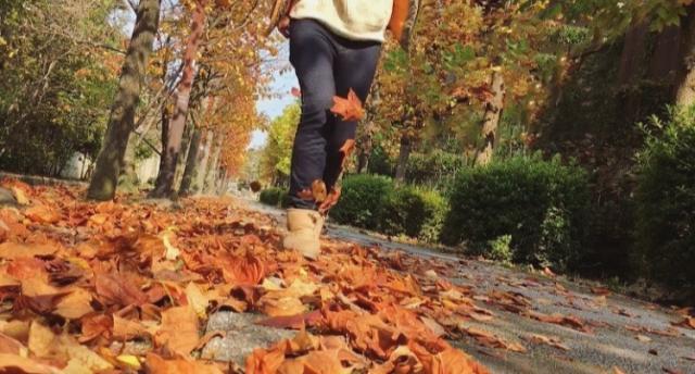 秋の散歩道と女性