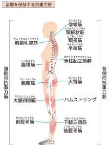 全身の筋肉