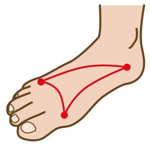 足裏のアーチ構造