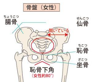 女性の骨盤
