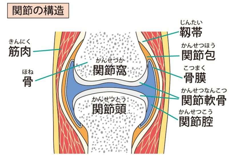 ボキボキ音に関係する関節の構造