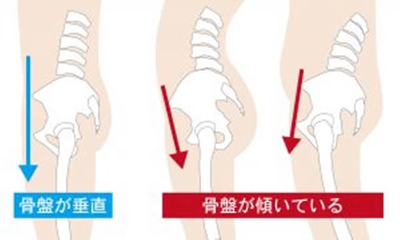 上前腸骨棘と恥骨を結ぶ線が地面に対して垂直